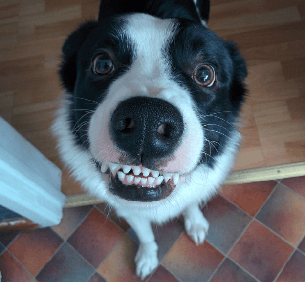 How to look after your dog's teeth, a Vet's guide.