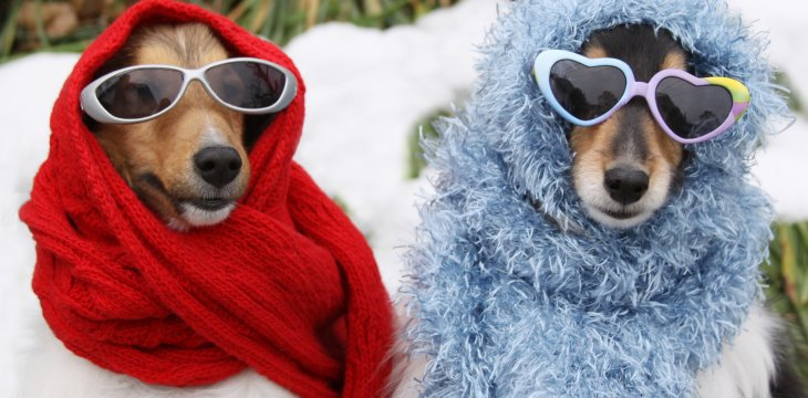 How to keep your dog warm in winter