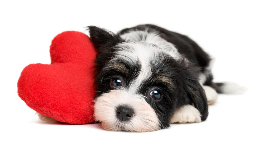 heartpuppy